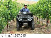Купить «Фермер на винограднике», фото № 1567015, снято 15 июля 2008 г. (c) Константин Сутягин / Фотобанк Лори