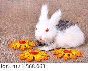 Купить «Пасхальный кролик», фото № 1568063, снято 15 февраля 2010 г. (c) Pshenichka / Фотобанк Лори