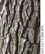 Кора дерева (фон) Стоковое фото, фотограф Марина Трушникова / Фотобанк Лори