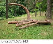 Дерево. Стоковое фото, фотограф Ольга Маркова / Фотобанк Лори