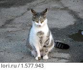 Кошка задумалась. Стоковое фото, фотограф Дмитрий Редин / Фотобанк Лори