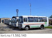 Купить «Новые автобусы ПАЗ-32054», фото № 1592143, снято 13 июня 2008 г. (c) Art Konovalov / Фотобанк Лори