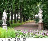 Купить «Аллея Летнего сада. Санкт-Петербург», фото № 1595455, снято 18 августа 2007 г. (c) Katerina / Фотобанк Лори