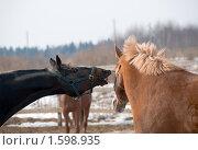 """""""Сейчас расскажу,  оборжешься!"""" Лошадь рассказывающая другу анекдот. Стоковое фото, фотограф Pukhov K / Фотобанк Лори"""