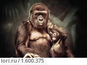 Купить «Горилла со своим детенышем», фото № 1600375, снято 20 марта 2010 г. (c) Евгений Захаров / Фотобанк Лори