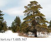 Весенний пейзаж. Стоковое фото, фотограф Дмитрий Батталов / Фотобанк Лори