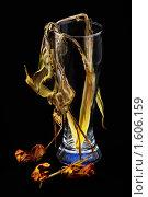 Увядшие тюльпаны на черном фоне. Стоковое фото, фотограф Александр Евсюков / Фотобанк Лори