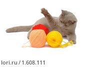 Купить «Британский голубой кот и клубки цветных ниток», фото № 1608111, снято 14 марта 2010 г. (c) Вячеслав Палес / Фотобанк Лори