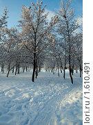 Зима. Стоковое фото, фотограф владимир самохин / Фотобанк Лори