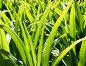 Зелёные листья, эксклюзивное фото № 1611379, снято 7 мая 2008 г. (c) Михаил Карташов / Фотобанк Лори