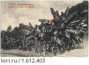 Купить «Дореволюционная открытка. Гагры. Банановая аллея», фото № 1612403, снято 15 сентября 2019 г. (c) Staryh Luiba / Фотобанк Лори