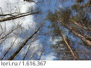 Купить «Небо», фото № 1616367, снято 23 марта 2010 г. (c) Алексей Байдин / Фотобанк Лори