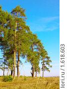 Купить «Опушка соснового бора на фоне неба», фото № 1618603, снято 9 апреля 2010 г. (c) Alexandr Shevchenko / Фотобанк Лори