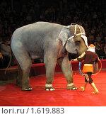 Купить «Слон на арене цирка. Санкт-Петербург», фото № 1619883, снято 10 апреля 2010 г. (c) Юлия Селезнева / Фотобанк Лори