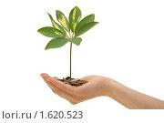 Растение и монеты в руке. Стоковое фото, фотограф Воронин Владимир Сергеевич / Фотобанк Лори