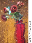Букет роз за мокрым стеклом. Стоковое фото, фотограф Татьяна Соколова / Фотобанк Лори