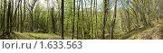 Купить «Панорама. Весенний лес», фото № 1633563, снято 16 апреля 2010 г. (c) Денис Шашкин / Фотобанк Лори