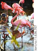 Розовый фламинго. Стоковое фото, фотограф Бурдина Мария / Фотобанк Лори