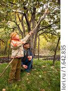 Купить «Дедушка с внуком собирают яблоки в саду», фото № 1642835, снято 8 октября 2009 г. (c) Losevsky Pavel / Фотобанк Лори