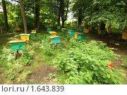 Купить «Пасека», фото № 1643839, снято 17 июля 2009 г. (c) Losevsky Pavel / Фотобанк Лори