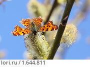Купить «Бабочка на цветке вербы», фото № 1644811, снято 12 апреля 2010 г. (c) Леонид Якутин / Фотобанк Лори