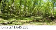 Купить «Панорама леса», фото № 1645235, снято 20 апреля 2010 г. (c) Денис Шашкин / Фотобанк Лори