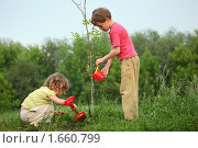 Купить «Дети сажают дерево», фото № 1660799, снято 11 июня 2009 г. (c) Losevsky Pavel / Фотобанк Лори