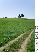 Корова, церковь и дерево далеко за лугом. Стоковое фото, фотограф Sergii Korshun / Фотобанк Лори