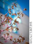 Купить «Ветки сакуры на фоне офисного здания», фото № 1667915, снято 26 апреля 2010 г. (c) Галина Короленко / Фотобанк Лори