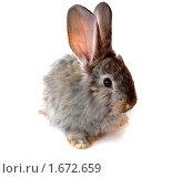 Купить «Кролик», фото № 1672659, снято 30 апреля 2010 г. (c) Ткачук Оксана / Фотобанк Лори