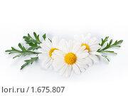 Купить «Белые ромашки», фото № 1675807, снято 23 апреля 2010 г. (c) Лисовская Наталья / Фотобанк Лори