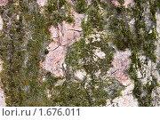 Кора дерева, поросшая мхом. Стоковое фото, фотограф Олег Фафурин / Фотобанк Лори