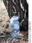 Купить «Сбор березового сока в бутыль», фото № 1683707, снято 24 апреля 2010 г. (c) Валерий Лифонтов / Фотобанк Лори