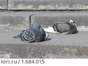 Голуби. Стоковое фото, фотограф Анастасия Захаренко / Фотобанк Лори