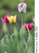 Купить «Превосходство», эксклюзивное фото № 1686707, снято 8 мая 2010 г. (c) Svet / Фотобанк Лори