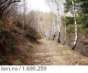 В лесу , Италия. Стоковое фото, фотограф Татьяна Крамаревская / Фотобанк Лори