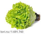 Купить «Пучок салата на белом фоне», фото № 1691743, снято 23 апреля 2010 г. (c) Денис Ларкин / Фотобанк Лори
