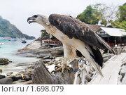 Купить «Хищная птица», фото № 1698079, снято 9 апреля 2010 г. (c) Светлана  Гордачева / Фотобанк Лори