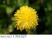 Купить «Одуванчик», фото № 1703027, снято 14 мая 2010 г. (c) Иван Федоренко / Фотобанк Лори