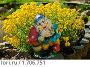 Гном на фоне цветов. Стоковое фото, фотограф Анатолий Соловьев / Фотобанк Лори