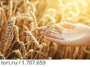 Купить «Молодая девушка держит колосок пшеницы», фото № 1707659, снято 9 августа 2009 г. (c) chaoss / Фотобанк Лори
