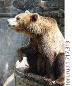 Медведь. Стоковое фото, фотограф Конева Кира / Фотобанк Лори