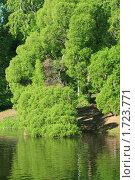 Дерево в воде. Стоковое фото, фотограф Demian P. Lee / Фотобанк Лори