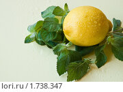 Купить «Лимон и мята на светло-желтом фоне в каплях воды», фото № 1738347, снято 29 мая 2010 г. (c) Светлана Кузнецова / Фотобанк Лори