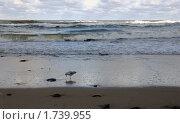 Одноногая чайка, глядящая в свое отражение. Стоковое фото, фотограф Svet / Фотобанк Лори