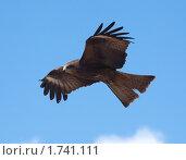 Купить «Хищная птица», фото № 1741111, снято 24 мая 2010 г. (c) hunta / Фотобанк Лори