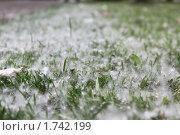 Трава в пухе. Стоковое фото, фотограф Анастасия Захаренко / Фотобанк Лори