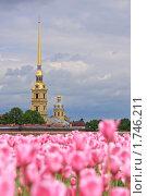 Купить «Петропавловская крепость, лето», фото № 1746211, снято 30 мая 2010 г. (c) Роман Рожков / Фотобанк Лори