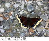 Купить «Бабочка на камнях», фото № 1747019, снято 24 августа 2008 г. (c) Татьяна Злобина / Фотобанк Лори