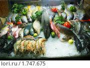 Морепродукты на витрине. Стоковое фото, фотограф Анастасия Репникова / Фотобанк Лори